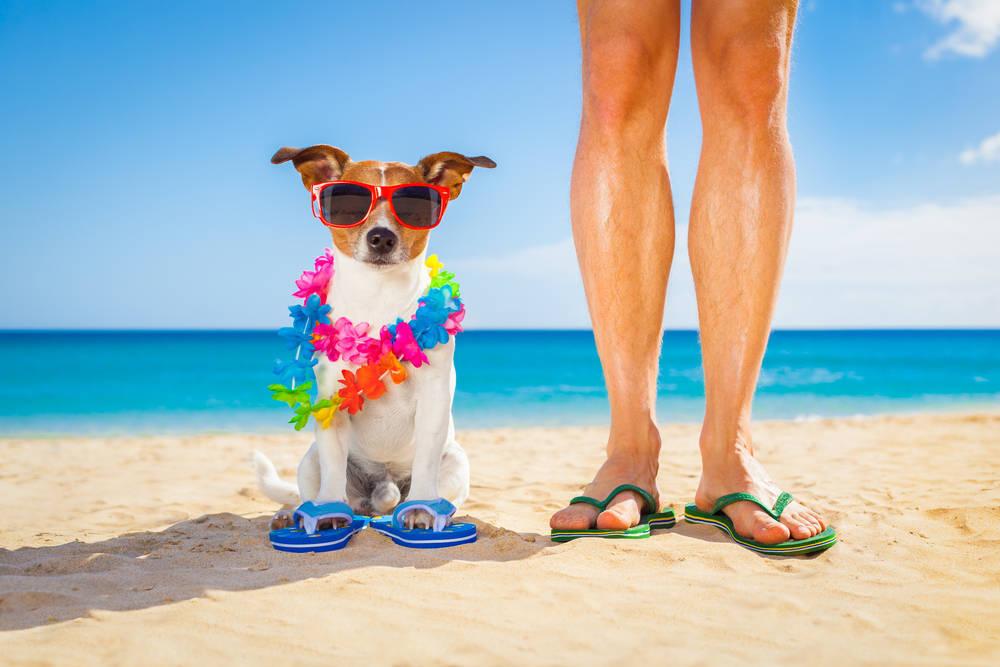 Las mascotas, las mejores acompañantes para unas vacaciones